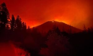 Wildfires that damage marijuana crops are focus of new federal group