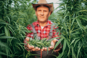 Why do we say indica or sativa? - Latest Cannabis News Today